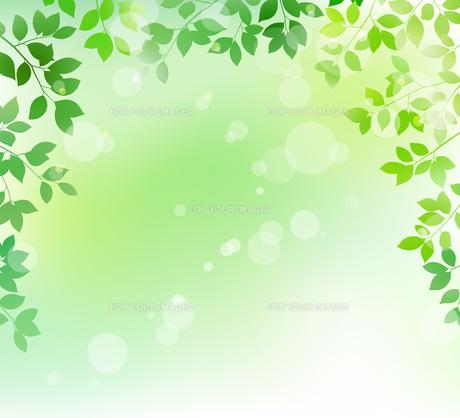 新緑と木漏れ日イメージ 背景素材のイラスト素材 [FYI01242079]