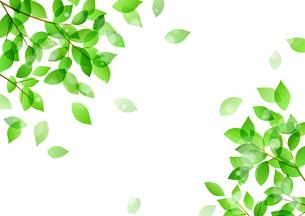 新緑と木漏れ日イメージ 背景素材のイラスト素材 [FYI01242089]