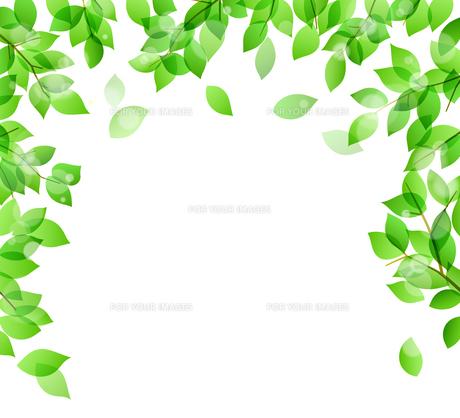 新緑と木漏れ日イメージ 背景素材のイラスト素材 [FYI01242090]