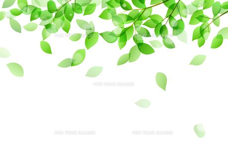 新緑と木漏れ日イメージ 背景素材のイラスト素材 [FYI01242091]