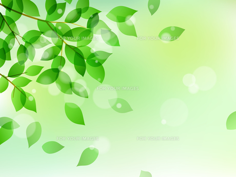 新緑と木漏れ日イメージ 背景素材のイラスト素材 [FYI01242092]