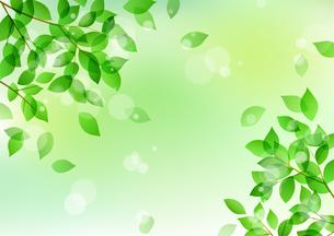 新緑と木漏れ日イメージ 背景素材のイラスト素材 [FYI01242093]