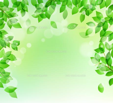新緑と木漏れ日イメージ 背景素材のイラスト素材 [FYI01242094]
