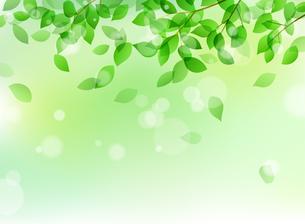 新緑と木漏れ日イメージ 背景素材のイラスト素材 [FYI01242095]