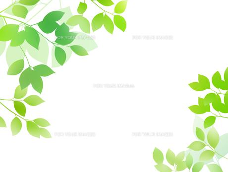 新緑イメージ 背景素材のイラスト素材 [FYI01242096]
