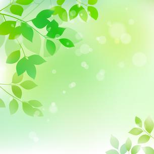 新緑と木漏れ日イメージ 背景素材のイラスト素材 [FYI01242099]