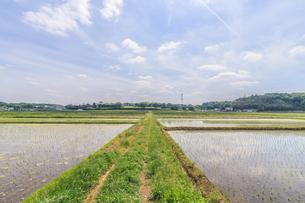 春の四街道の田園風景の写真素材 [FYI01242116]