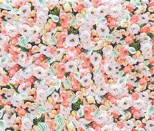 花の写真素材 [FYI01242468]