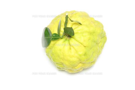 獅子柚子の写真素材 [FYI01242473]