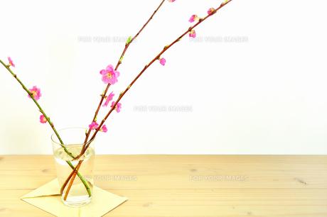 ガラスコップに入ったモモの花の写真素材 [FYI01242482]