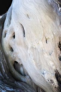 大きな木の幹の表面の写真素材 [FYI01242494]