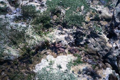 岩礁に付着した藻の写真素材 [FYI01242499]