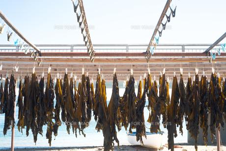 海藻が洗濯ばさみに止めて干されているの写真素材 [FYI01242509]
