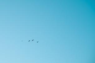 鳥の写真素材 [FYI01242547]