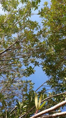 樹木の写真素材 [FYI01242565]