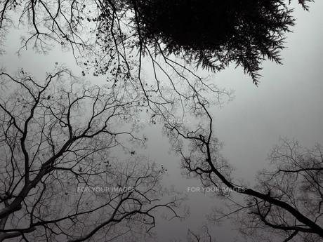 モノクローム色の空の写真素材 [FYI01242787]