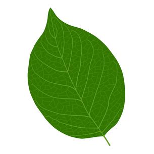 葉の線画素材のイラスト素材 [FYI01243052]