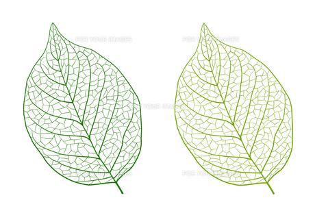 葉の線画素材のイラスト素材 [FYI01243053]
