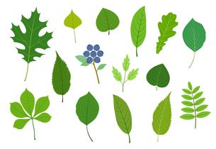 緑の葉 イラスト素材セットのイラスト素材 [FYI01243054]