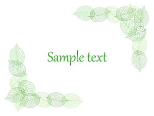 葉 装飾フレーム素材のイラスト素材 [FYI01243068]