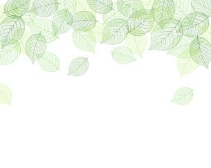 葉 背景フレーム素材のイラスト素材 [FYI01243072]