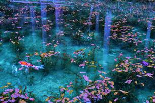 モネの池の写真素材 [FYI01243170]