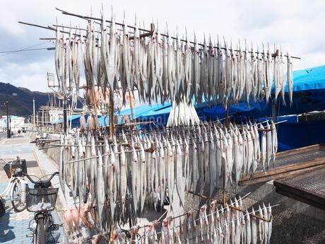 鞆の浦港の漁市場に吊るされたサヨリの写真素材 [FYI01243273]
