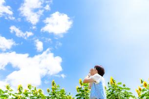 夏を運ぶ風に「またね!」とカラフルな向日葵の元気を預けるの写真素材 [FYI01243376]