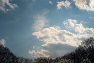 ドーム状にそびえる木々の向こうの青空の写真素材 [FYI01243563]