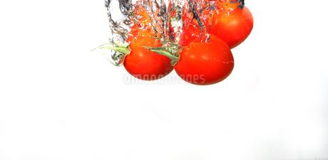 水中のミニトマトの写真素材 [FYI01243666]