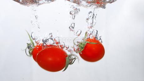 水中のミニトマトの写真素材 [FYI01243698]