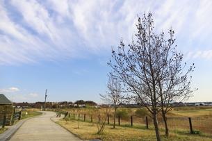 郊外の風景 公園と青い空の写真素材 [FYI01244051]