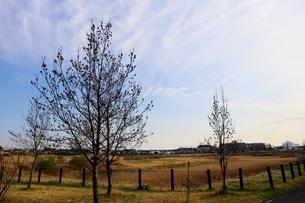 郊外の風景 公園と青い空の写真素材 [FYI01244052]