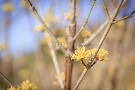 梅の写真素材 [FYI01244155]