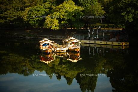 大阪城内堀の写真素材 [FYI01244172]