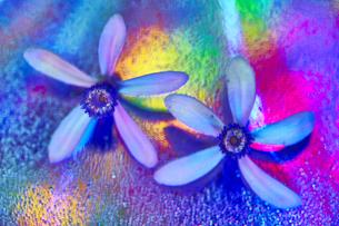 花の写真素材 [FYI01244191]