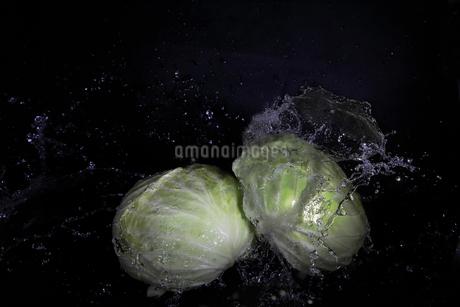 キャベツと水飛沫の写真素材 [FYI01244219]
