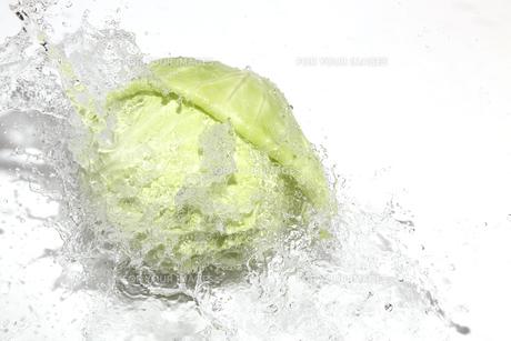 キャベツと水飛沫の写真素材 [FYI01244220]