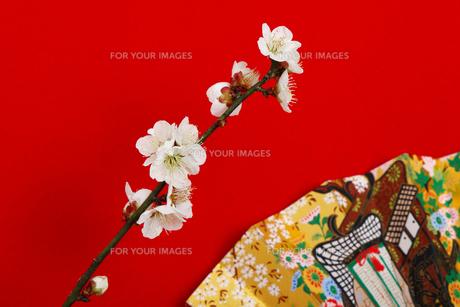 和風イメージ の写真素材 [FYI01244298]