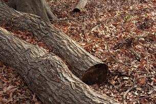 落ち葉と丸太の写真素材 [FYI01244425]