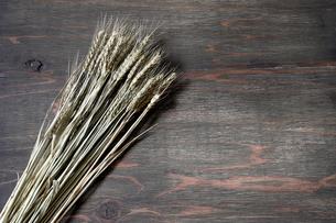 乾燥した麦の写真素材 [FYI01244502]