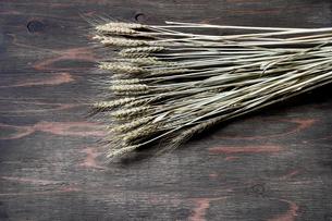 乾燥した麦の写真素材 [FYI01244509]