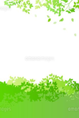 緑イメージ 背景素材のイラスト素材 [FYI01244599]