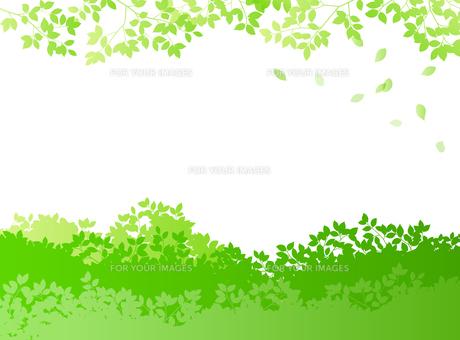緑イメージ 背景素材のイラスト素材 [FYI01244603]