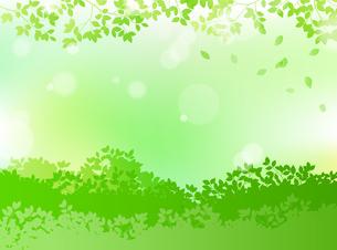緑と木漏れ日 背景素材のイラスト素材 [FYI01244604]