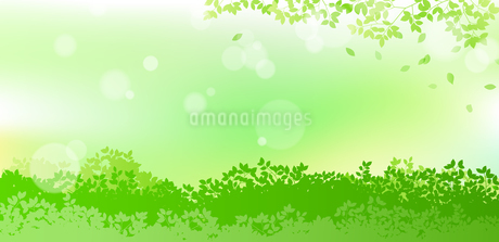 緑と木漏れ日 背景素材のイラスト素材 [FYI01244606]
