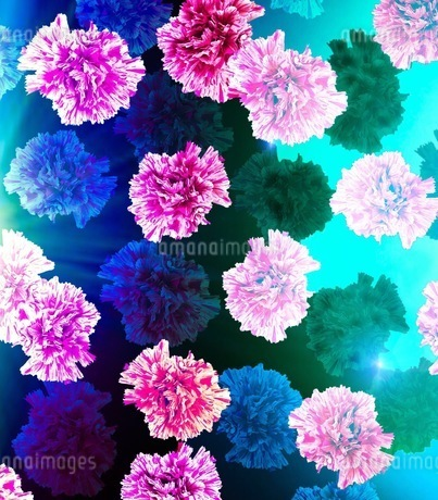 花の写真素材 [FYI01244621]