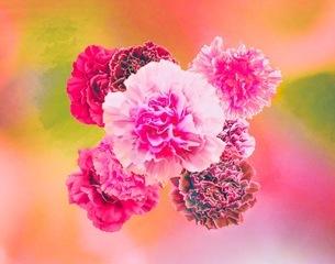 花の写真素材 [FYI01244625]
