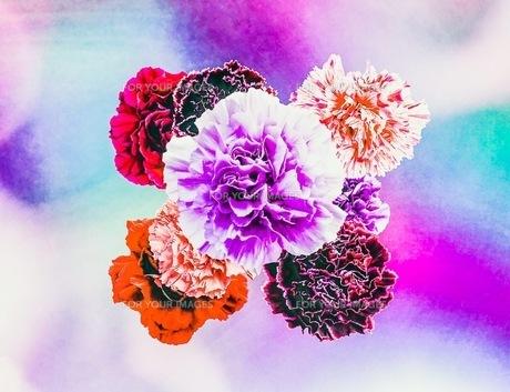 花の写真素材 [FYI01244626]