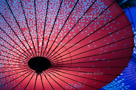 カラフルな和傘のイメージの写真素材 [FYI01244679]